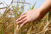 Zbliżenie ludzkiej dłoni dotykając trawy, ' uczucie przyrody — Zdjęcie stockowe