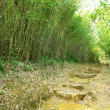 Green Bamboo Forest -- a path leads through a lush bamboo forest — Stock Photo