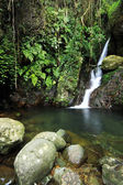Waterfall making its way into a pond in the rainforest — Stock Photo