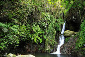 Vodopád razí svou cestu do rybníka v pralese — Stock fotografie