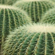 Cactus of sphericity style grows in sand - Stock Photo