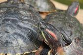Tortoise sitting on stone — Stock Photo