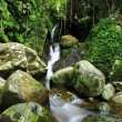 Stock Photo: Hidden rain forest waterfall with lush foliage and mossy rocks