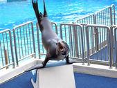 Sea lion basking in the sun — Stock Photo