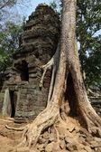 Roots over Angkor Wat ruins — Stock Photo