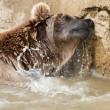 Brown Bear — Stock Photo #5563736