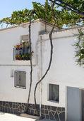 Vine growing on a house in Cadiar Village — Stock Photo