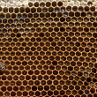 Stock Photo: Honeybee on Honeycomb