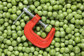 Green pea in a clamp — Stock Photo