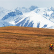 Mountain biker and snow peaks — Stock Photo