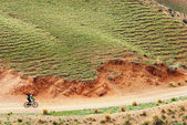 Mountain biker on rural road — Stock Photo