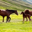 Mares and foals — Stock Photo #5756293
