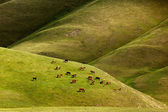 Horses graze in the mountains — Stock Photo