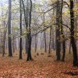 Mist and autumn in forest — Stock Photo