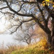Autumn tree and fog - Stock Photo