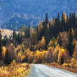 Old country road in autumn mountain forest — Stock Photo #6608685