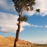 Lone tree in desert mountains — Stock Photo #6698880