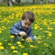 Royalty-Free Stock Photo: Boy collects spring flowers