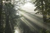 Sun's rays — Stock Photo