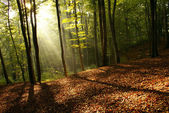 Dawn in a forest — Stock Photo