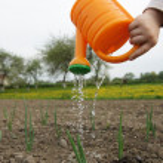 Watering plants — Stock Photo