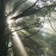 Sunrays in fog — Stock Photo