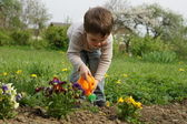 Boy carefully watered flowers — Stock Photo