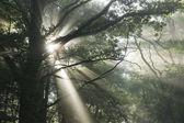 Sunrays in fog — Stock Photo