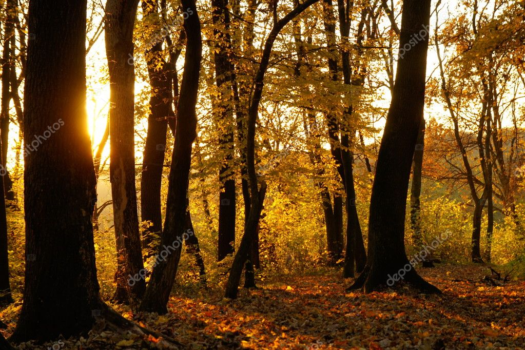 Autumn forest in the evening — Stock Photo #5520070