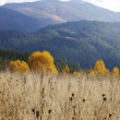 Foto Stock: Autumn in Carpathian mountains