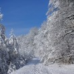 Sunny day of winter — Stock Photo