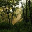 Sun's rays filtering through the branches of trees — Stock Photo