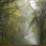 mistige landschap — Stockfoto