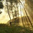 Walk along the forest — Stock Photo