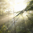 Sunrays — Stock Photo #5577845
