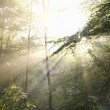 Stock Photo: Sunrays