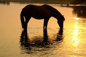Horse on a watering place — Stock Photo