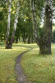 Narrow trail — Stock Photo
