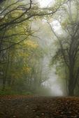 Foggy scenery — Stock Photo