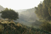 Misty morning — Stock Photo