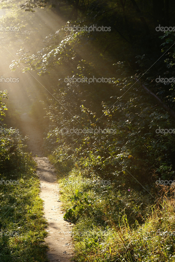 Walking trail in the forest, illuminated by sunlight            Stock Photo #5577830