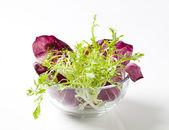 Salad greens — Stock Photo