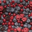 Fresh berry fruit — Stock Photo #5580652