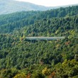 Bridge over a forested valley — Stock Photo