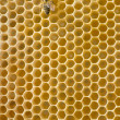 Honeybee on a comb — Stock Photo