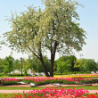 Landscaping, trees, flowers — Stockfoto
