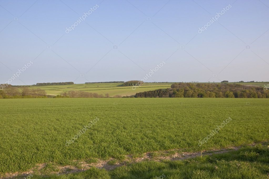 An arable landscape with patchwork fields trees and hedgerows under a blue sky — Stock Photo #5500485