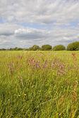 Fleurs sauvages prairie — Photo