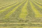 свежесрезанные сена — Стоковое фото