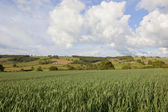 Landscape with wheat field — Stock Photo